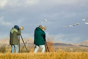 Agnantio Hotel Spa - Bird Watching