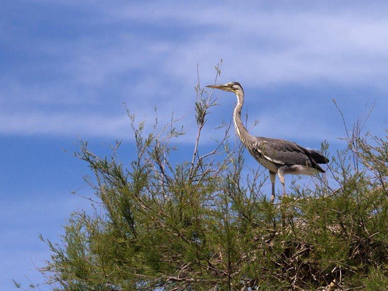 Ornithological Park Pont de Gau